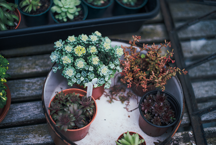 ​Seven Big Tips for Small Gardens Image